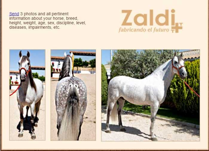 zaldi saddle fit conformation photos