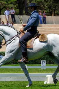 The-First-Phase--The-Dressage-Test.jpg