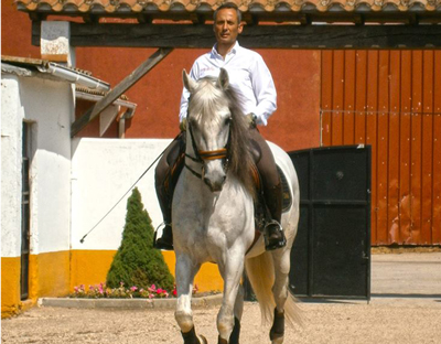 SPANISH COUNTRY, PORTUGUESE & WORKING EQUITATION